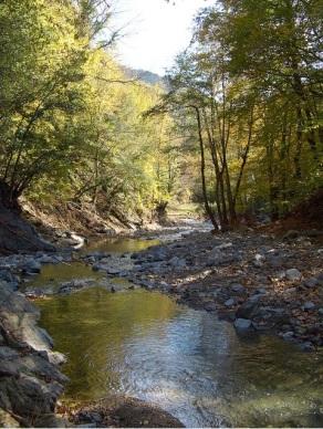 bosques centenarios desaparecerán